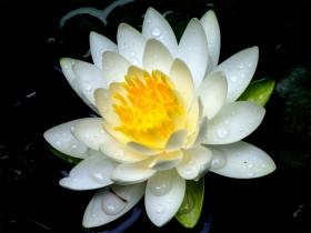 Photo6543