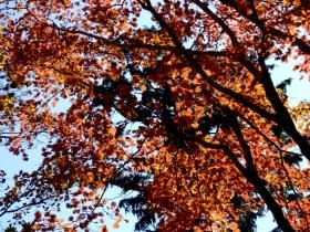 Photo6697